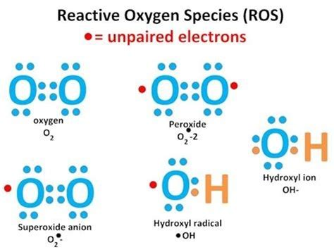 What are the dangers of reactive oxygen species in the